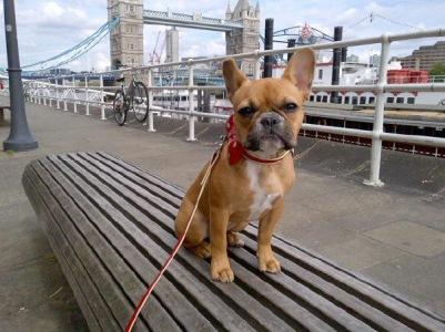 Dolly in London