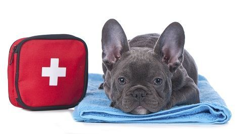 mundane dogs first aid kit